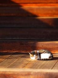 03山寺本坊の猫★DSC05068s.jpg