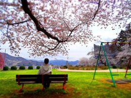 14月岡公園桜s★DSC00617.jpg
