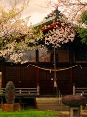 16月岡公園桜古峯神社s★DSC00652.jpg