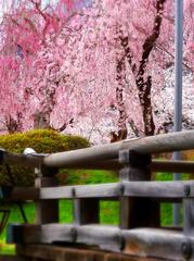 17月岡公園桜古峯神社s★DSC00657.jpg