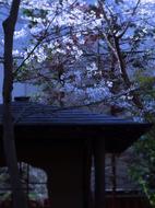 30中庭s★DSC00312.jpg