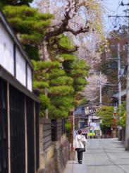 65武家屋敷の桜s★DSC00452.jpg