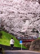 10月岡公園散策路s★DSC00542.jpg