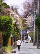 63武家屋敷の桜s★DSC00442.jpg